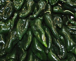 Chiles poblano.  Choose the largest chiles with the smoothest sides for easy roasting.